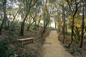 Bosque de cenizas